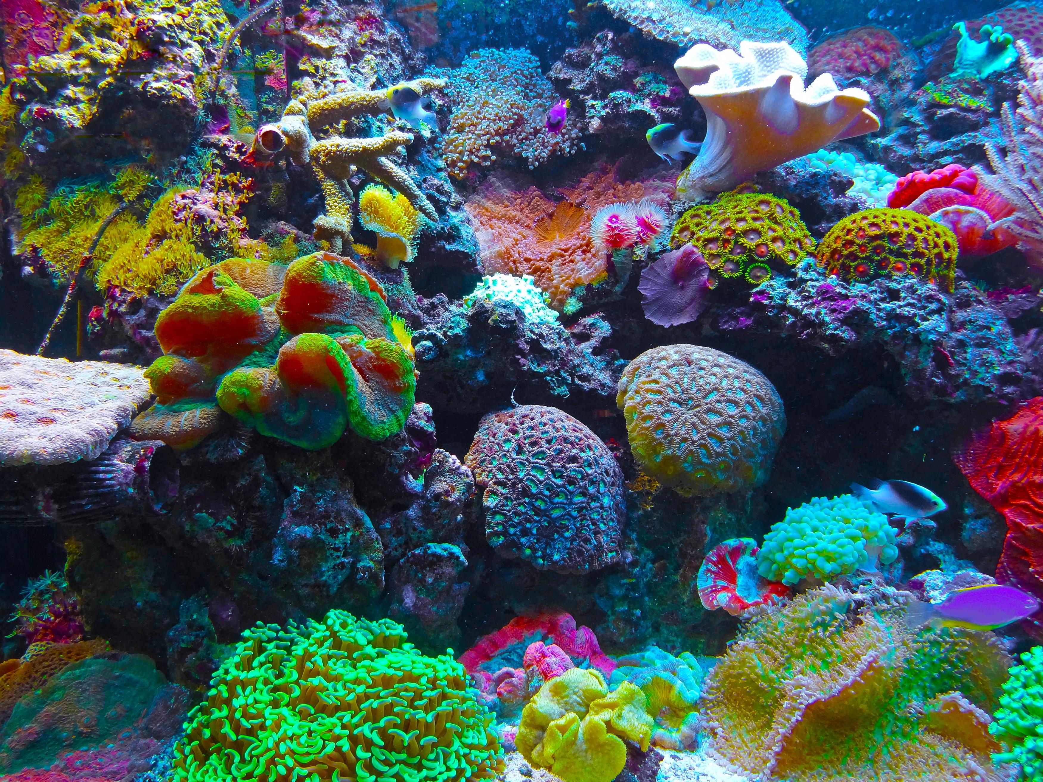 korallenriff kostenlos